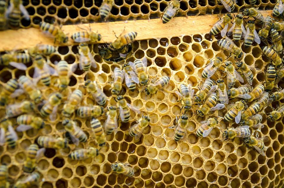 """Co w ulu bzyczy? – warsztaty pszczelarskie w przedszkolu – kontynuacja działań w ramach projektu """"Działam – doświadczam – odkrywam""""."""