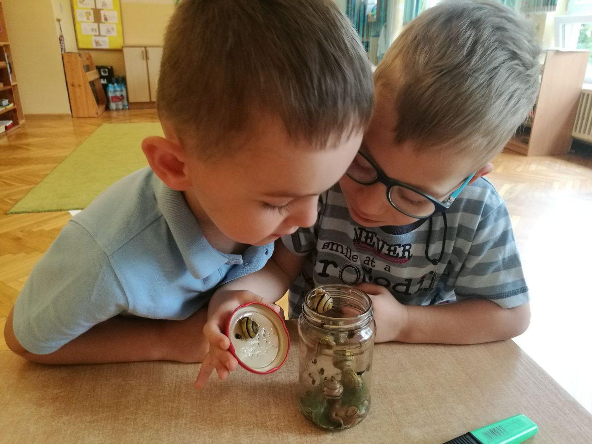 """Mieszkańcy ogrodu przedszkolnego – hodowla ślimaka w ramach realizacji projektu ,,Działam- doświadczam- odkrywam"""""""